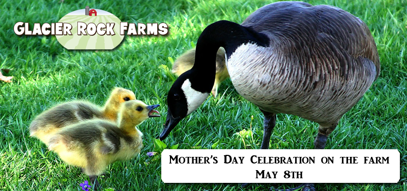 Mother's Day Petting Zoo Farm