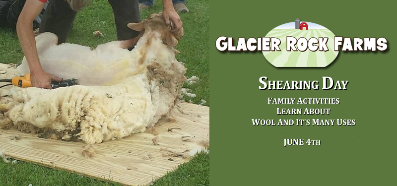 Shearing Day Family Activities